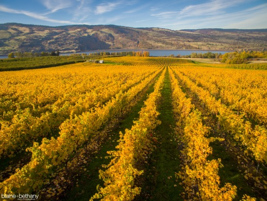 Columbia Gorge Winery Association